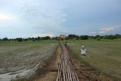 поле естественное стоковое фото