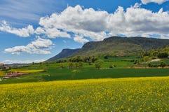 Поле желтого рапса, зеленое поле, и горы стоковая фотография