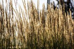 Поле желтой травы Стоковые Изображения RF