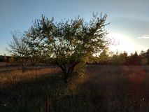 Поле захода солнца Стоковое Изображение RF