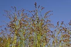 Поле зеленого растения Стоковые Изображения