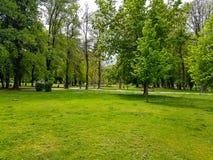Поле зеленой травы в большом парке города стоковые фотографии rf