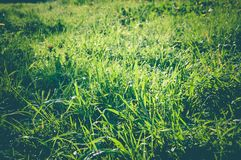 Поле зеленой травы в утре Стоковые Фото