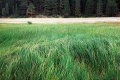 Поле зеленой травы и леса высокой травы стоковое фото