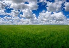 Поле зеленой травы на больших холмах и голубом небе с облаками Стоковая Фотография RF