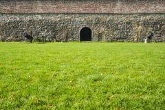 Поле зеленой травы с карамболями и кирпичной стеной в укрепленном городе Маастрихте, Нидерланд стоковое изображение rf