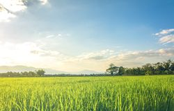 Поле зеленой травы Стоковое Фото