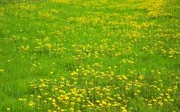 Поле зеленой травы Стоковое Изображение RF