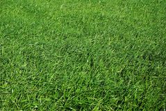 Поле зеленой травы Стоковая Фотография
