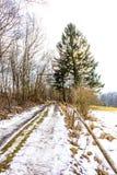 Поле земледелия в снеге и зиме Дерево и трава около почвы и поля Стоковые Изображения RF