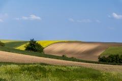 Поле земледелия и голубое небо Стоковое Фото