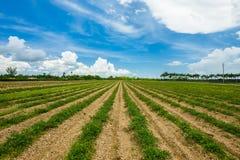 поле земледелия Стоковые Фотографии RF