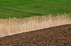 поле земледелия Стоковые Изображения