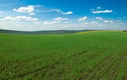 поле земледелия Стоковые Фото
