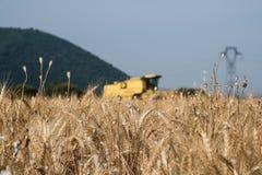 Поле зерна на переднем плане в Провансали с зернокомбайном в ба Стоковое Фото