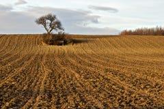 поле золотистое Стоковые Фото