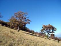 Поле и валы осени Стоковая Фотография RF
