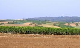Поле и виноградник Стоковая Фотография RF
