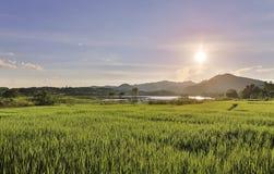 поле и гора риса Стоковая Фотография