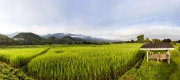 поле и гора риса Стоковые Фотографии RF