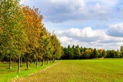 Поле и деревья в осени Стоковое Изображение RF