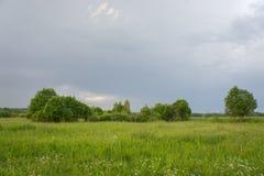 Поле и деревья немедленно после грозы стоковая фотография