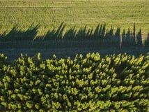 Поле и лес зеленого цвета сельской местности вида с воздуха на солнечный день Стоковое Изображение