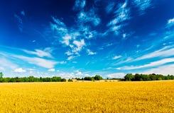 Поле и небо Стоковое Изображение RF