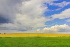 поле и облака Зелен-золота на голубом небе Стоковое Фото