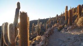 Поле кактуса стоковое изображение rf
