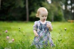 поле клевера младенца немногая Стоковое Изображение RF