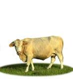 поле коровы Стоковое Изображение