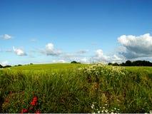 поле края Стоковое Фото