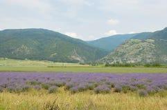 Поле лаванды в Болгарии Стоковая Фотография