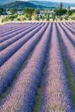 Поле лаванды в Провансали Стоковые Фотографии RF