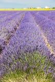 поле лаванды, Плато de Valensole, Провансаль, Франция стоковые фотографии rf
