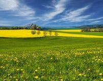 Поле Ландшафт Поле рапса Поле желтых цветков Стоковое Изображение RF