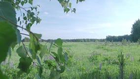 Поле лета зеленое акции видеоматериалы