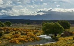 Поле люпинов в Новой Зеландии. Стоковые Фотографии RF