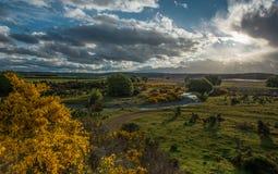 Поле люпинов в Новой Зеландии. Стоковые Фото