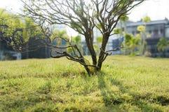 Поле малого дерева и зеленой травы в большом городе паркует Стоковое Изображение RF