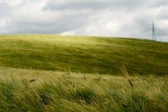 поле над ветром пшеницы Стоковое фото RF