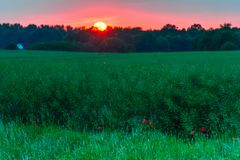 поле над заходом солнца рапса Стоковое Изображение RF