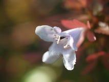 Поле одичалых цветков Стоковое фото RF