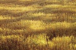 поле освещает пшеницу теней Стоковое фото RF