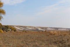 поле осени выгон Коровы пасут Табун коров на поле Стоковое Изображение