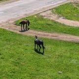 Поле осени с лошадями стоковое изображение