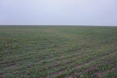 Поле осени с только пусканной ростии озимой пшеницей стоковая фотография