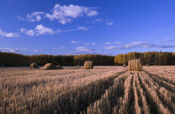 поле осени Стоковые Изображения RF
