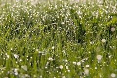 поле падений росы Стоковые Изображения RF
